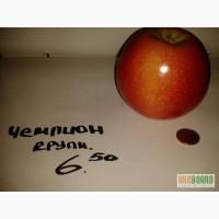Яблоки оптом яблоко мал. среднее. большое. Голд