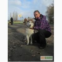 Услуги кинолога, дрессировка собак