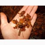 Продам террариумы для пауков