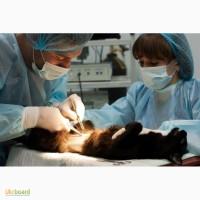 Лицензия на ветеринарную практику