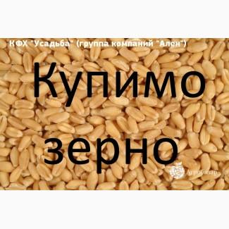 Куплю пшеницю з повишеною смітною