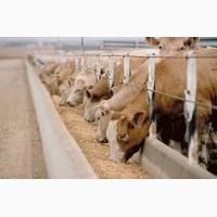 Корм для дойных коров молочного стада