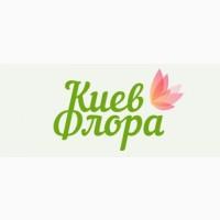КиевФлора - это доставка букетов по Киеву и области на заказ