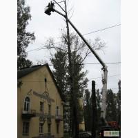 Удаление деревьев Киев 4665942, спил, валка. Корчевание пней.