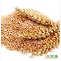 Отруби пшеничные.с доставкой