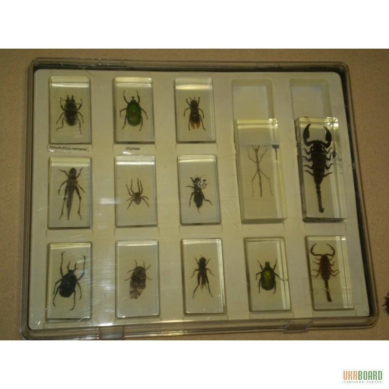 как заказать журнал насекомые и их знакомые