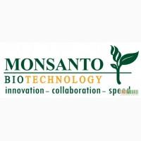Семена кукурузы Монсанто гибрид (Monsanto)