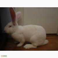 Продаю кролячі тушки