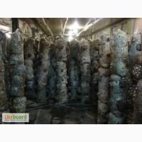 Продам в Сумы зерновой мицелий вешенки и шии-таке
