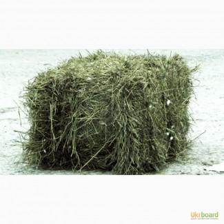 Луговое сено в тюках. Опт от 700шт. Бесплатная доставка