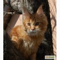 Супер котята Муйн-кун