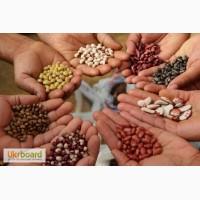 Семена бобовых. Разные сорта. Урожай 2016 года. Без ГМО. Своя. дешево