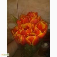 Продам тюльпаны форготтен дримс