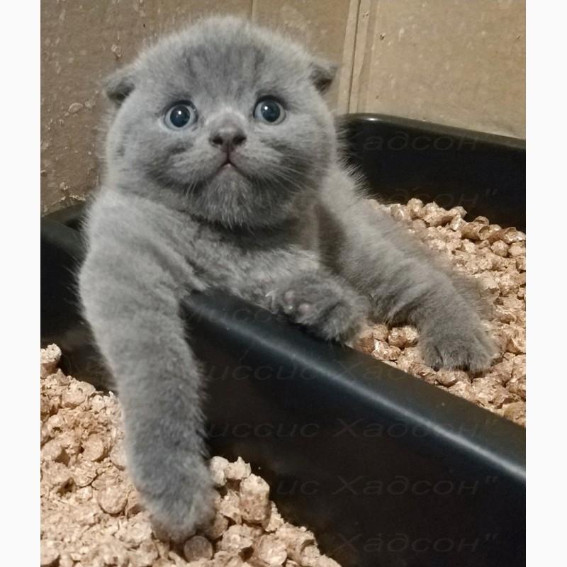 Самые пушистые котята в мире фото компьютере всё