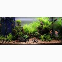 Обслуживание (чистка) аквариумов (домашних, офисных)