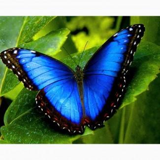 Продажа Живых тропических бабочек изФилиппин более 30 Видов