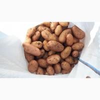 Продам картошку с поля Тирас