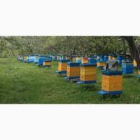 Продам бджолині сім#039;ї