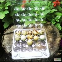 Инкубационные яйца перепелов.