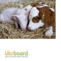 Премиксы, концентраты, престартерные корма, ЗЦМ для животноводства и птицеводства