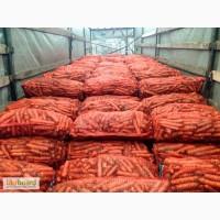 Морковь оптом со склада