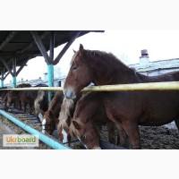 Сено для лошадей с бесплатной доставкой. Форма оплаты любая