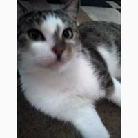 Охос Азулес, голубоглазый кот