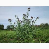 Семена Медоносы, Сидераты, пчелоинвентарь и многое другое