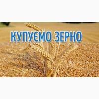 Куплю у сільгоспвиробників пшеницю різної якості