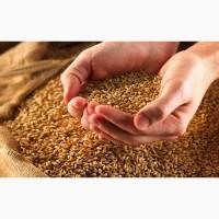 Семена посевной материал пшеницы, ячменя, озимые, яровые, импортные, отечественные