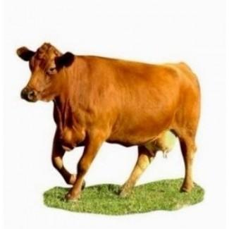 Корм добавка для коров телят бычков
