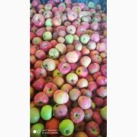 Куплю яблоки Закарпатская обл
