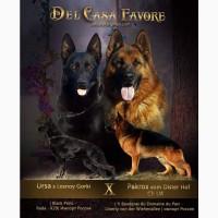 Del Casa Favore питомник КСУ. Широкий выбор высококлассных щенков