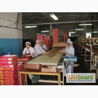 Рабочие на кондитерскую фабрику
