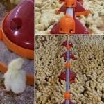 Линии кормления для бройлеров, кормушки для птицы