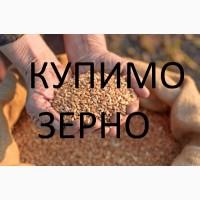 Велика компанія закуповує пшеницю