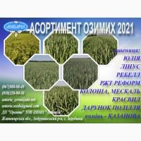 Насіння озимої пшениці ЛІНУС