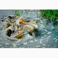 Весеннее зарыбление водоемов