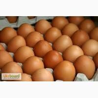 Птицефабрика реализует яйцо куриное
