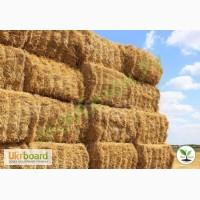 Ферме требуется сено для коров и телят