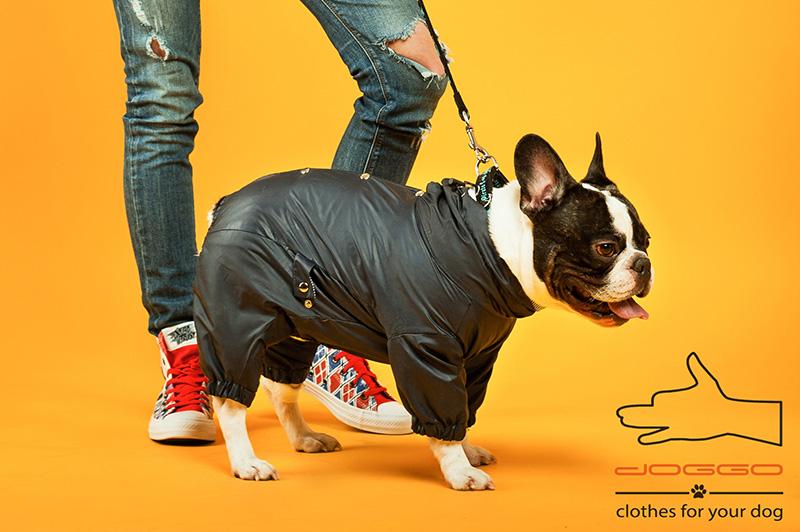 Фото 2. Демисезонная одежда для французского бульдога - ТМ DOGGO