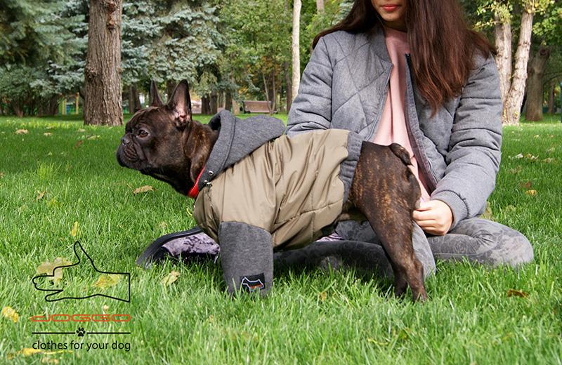 Фото 6. Демисезонная одежда для французского бульдога - ТМ DOGGO