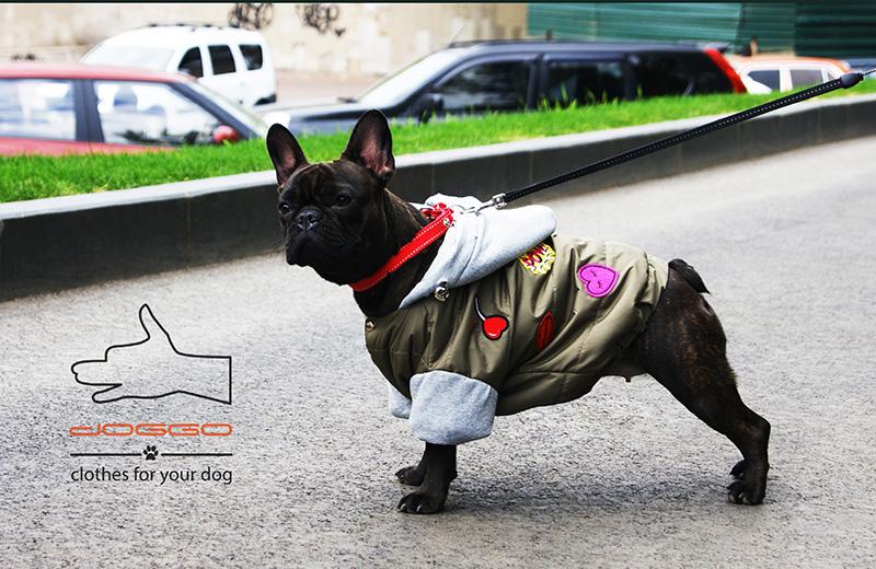 Фото 7. Демисезонная одежда для французского бульдога - ТМ DOGGO