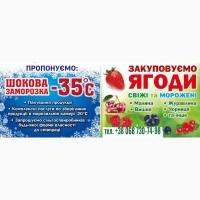 Закуповуємо свіжі ягоди