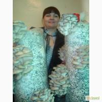 Мицелий для грибов