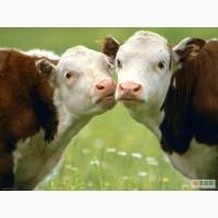 Молоко коровье домашнее с бесплатной доставкой на дом по Харькову