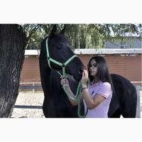 Срочная продажа лошади