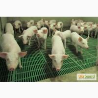 Полы для свиней, б/у полы для свиней, пластиковые полы для свиноматок