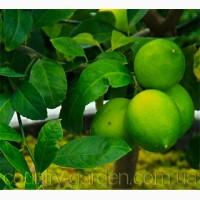 Продам Лимон в горшках, комнатное растение и много других растений (опт от 1000 грн)