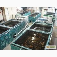 Карпы кои цена, аквариумные рыбки, рыбки, аквариум, ферма, питомник, кувшинки, опт